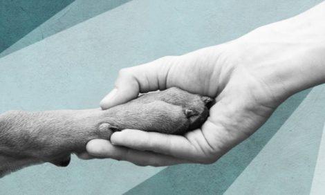 Благотворительность с Катей Бермант. Глава зоозащитного фонда «Рэй» Екатерина Панова — о «диванных войсках» и «хвостиках»