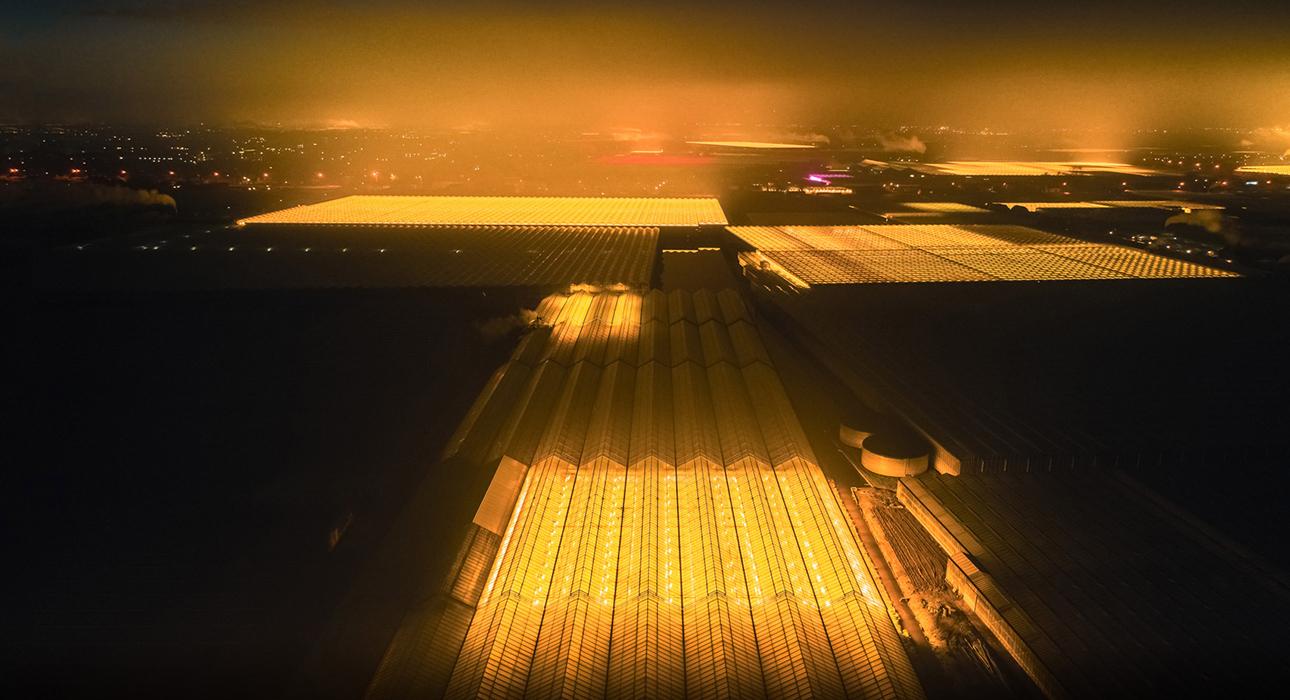 Фото дня: светящиеся теплицы в экопроекте нидерландского фотографа Тома Хегена