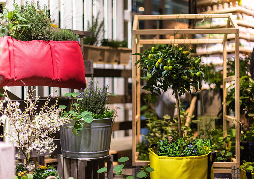 Сад на высоте: городское садоводство как способ пережить карантин