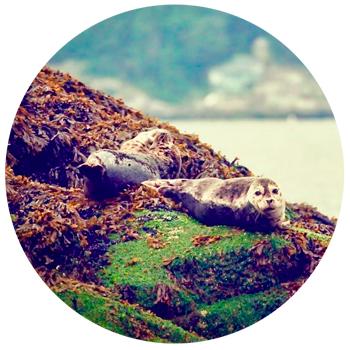Пляж морских котиков Провинция Британская Колумбия, Канада
