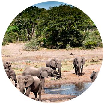 Парк слонов Тембе Мапуталенд, ЮАР