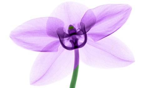 Вместо букета: 7 растений, которые станут отличным подарком на 8 Марта