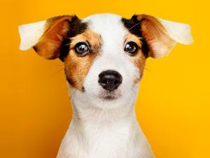 В нью-йоркских приютах для животных закончились коты и собаки