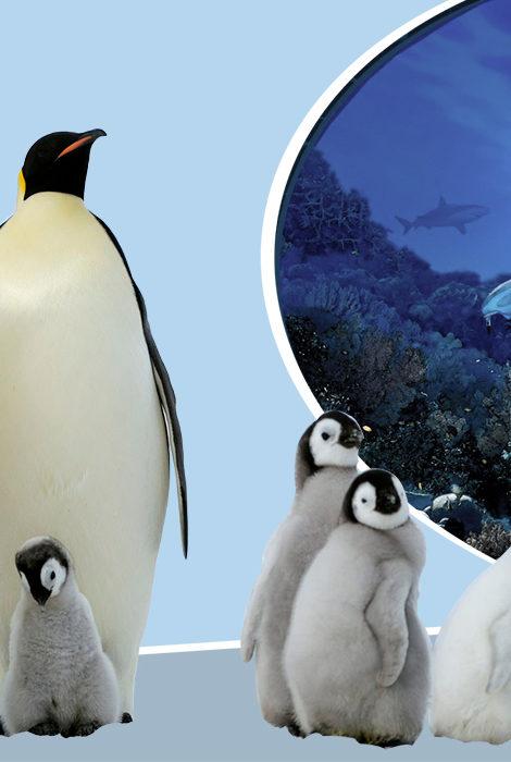 Необычные посетители: пингвины на экскурсии по аквариуму