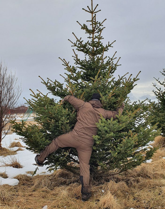 Пять минут в день обнимать дерево — рекомендация исландской лесной службы