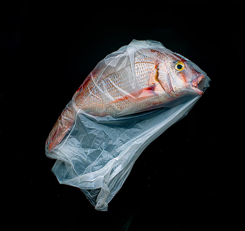 Хорхе Рейнал из Аргентины в своей фотографии выразил весь ужас засорения океана пластиком.