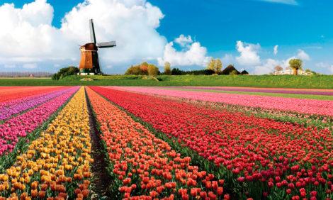 Виртуальные тюльпаны: нидерландский парк снимает видеоэкскурсии по своим цветникам