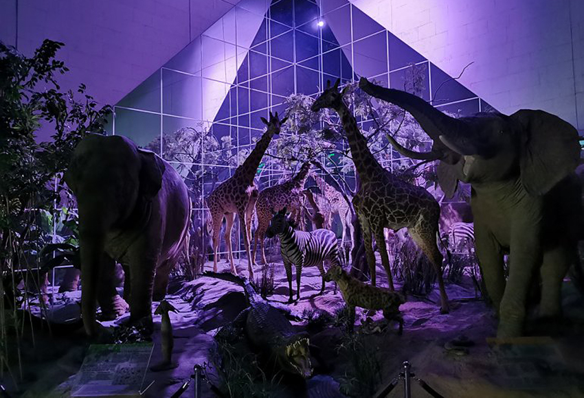 Ночь в Дарвиновском музее
