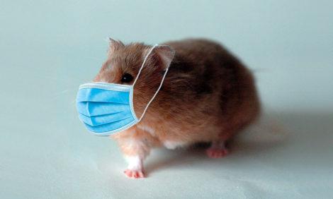Одобрено хомяками: гонконгское исследование доказало эффективность массового ношения масок