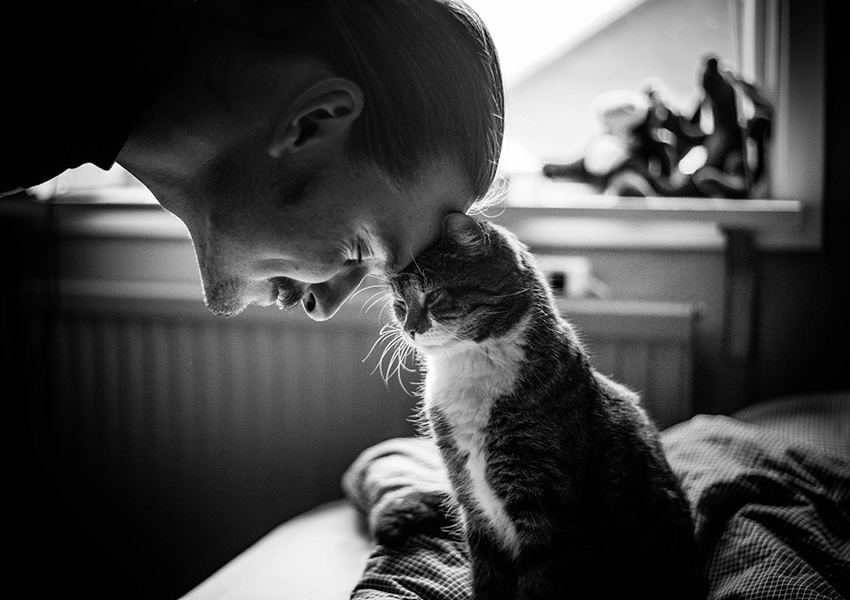 Свайп влево: одинокие мужчины с котами непопулярны на платформах знакомств