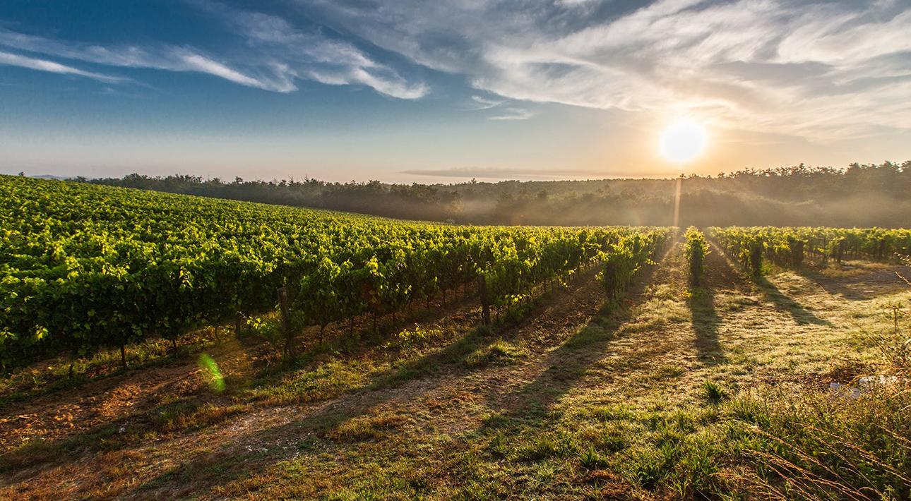 Вино от Chanel: модный дом представил розе и белое со своего нового виноградника