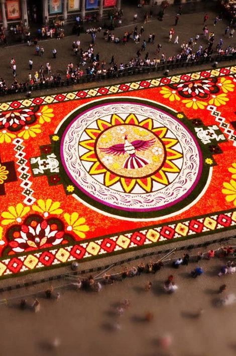Видео дня. Миллион разноцветных бегоний: как создается брюссельский цветочный ковер