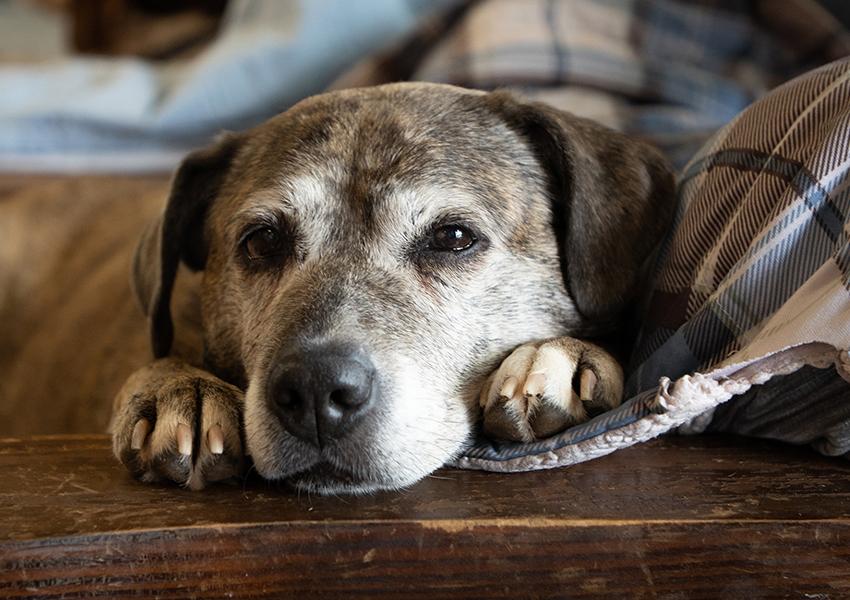 Годовалый щенок — все равно что 30-летний человек, утверждают ученые