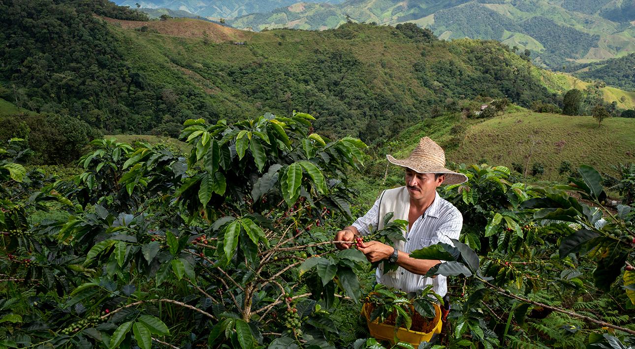 Зимбабве, Уганда, Колумбия или Гватемала: выбираем маршрут путешествия по... чашке кофе