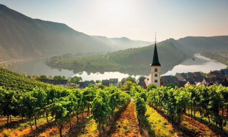 Путешествие к винам Германии: рейнские лозы, многоликий рислинг и сладость холода