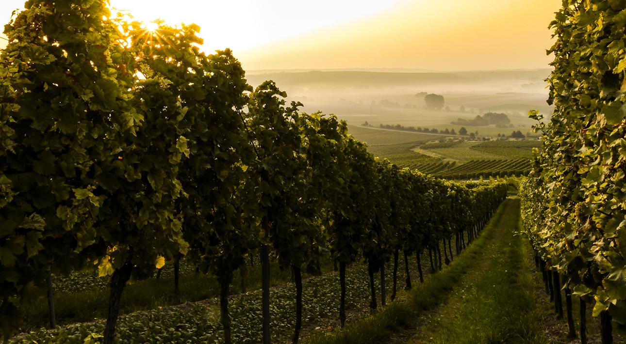 Фестиваль Riesling Weeks 2020: интервью с директором по маркетингу Института немецкого вина Штеффеном Шиндлером