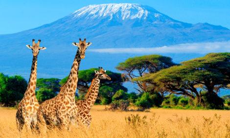 Кения ждет туристов из России