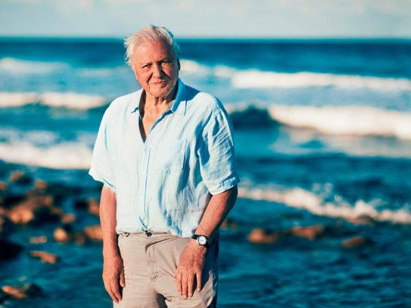 «Мир был бы лучше, если бы человека вообще не было»: Дэвиду Аттенборо — 95 лет