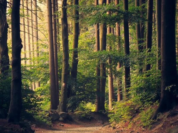 Sounds of the Forest: появился сайт со звуками лесов совсего мира