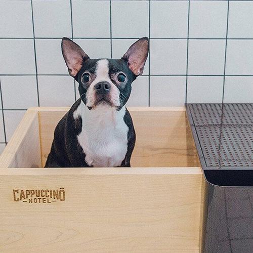 Сappuccino Hotel в Сеуле: идеальное место для собак-путешественников и их хозяев