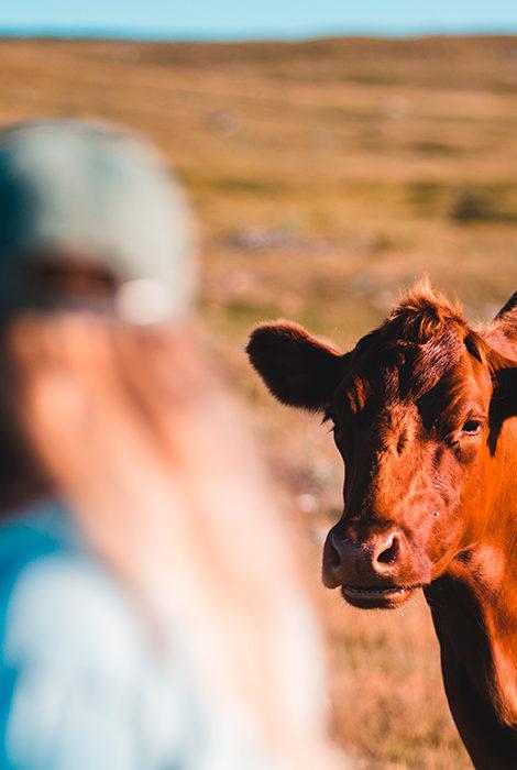 Обнимашки с коровами: что хорошего в новом wellness-тренде из Нидерландов
