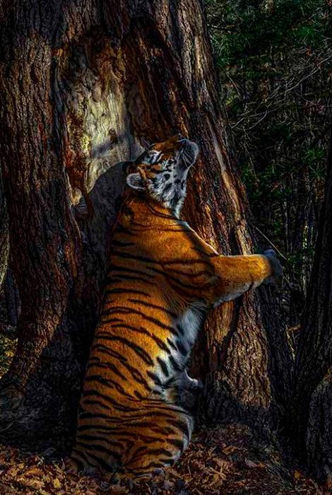 Фото дня: гран-при фотоконкурса британского Музея естественной истории получил Сергей Горшков