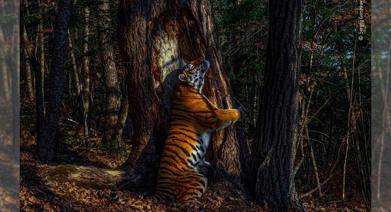 Фото дня: гран-при ежегодного фотоконкурса британского Музея естественной истории получил россиянин Сергей Горшков