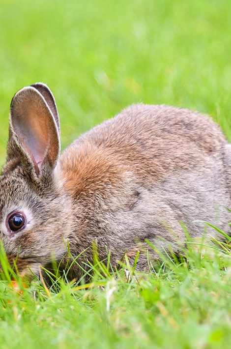 Eco Living: тестирование косметики на животных снова под вопросом в ЕС