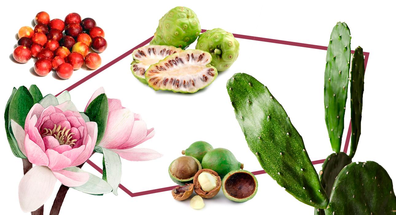 Редкие ягоды и растения в косметике: каму-каму, бабассу и другие