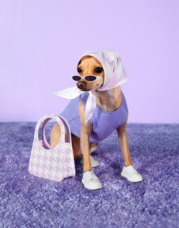 Именами каких брендов россияне называют своих собак?