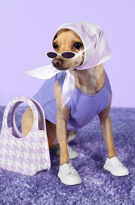 «Тиффани, ко мне!»: именами каких брендов россияне называют своих собак