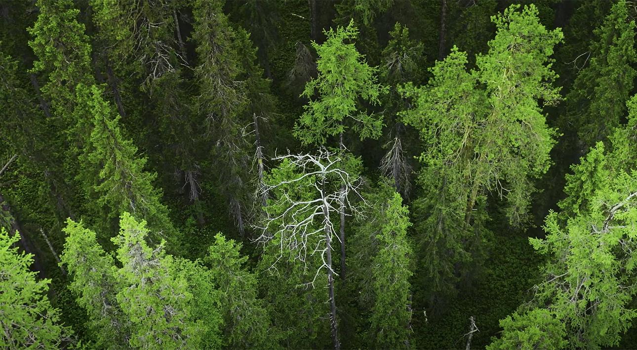 Видео дня: WWF сняла фильм об экспедиции в дикую тайгу в Архангельской области