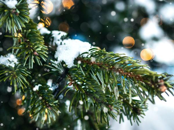 Город: Московский зоопарк запустил акцию по сбору нераспроданных елок и сосен
