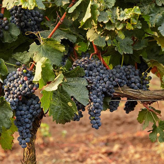 Винодельня «Поместье Голубицкое»
