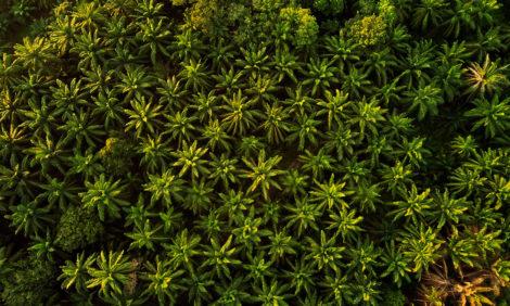 Качество жизни. Татьяна Азатян: вся правда о пальмовом масле — страшная и не очень
