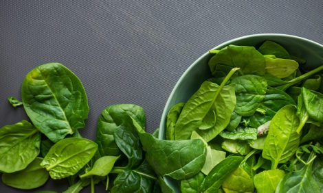 Eco Living: шпинат будет искать мины и предупредит об изменении климата