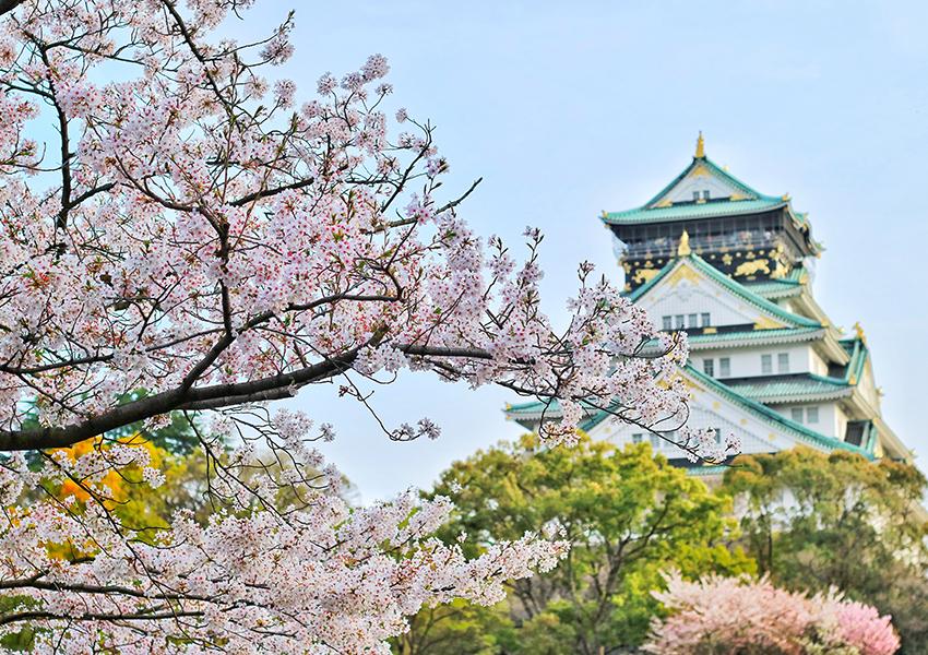 Сезон цветения японской сакуры начался рекордно рано в 2021 году