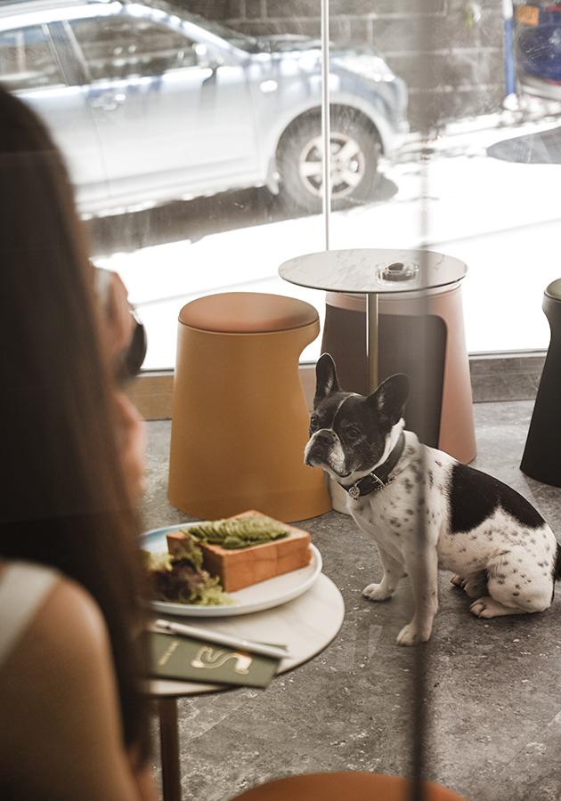 Город: покупателей с животными не пустят в кафе и магазины?