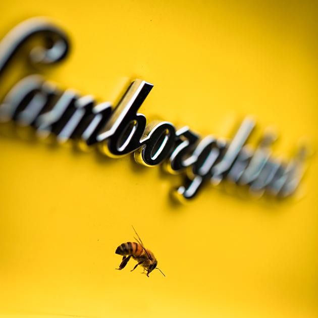 Пасека Lamborghini