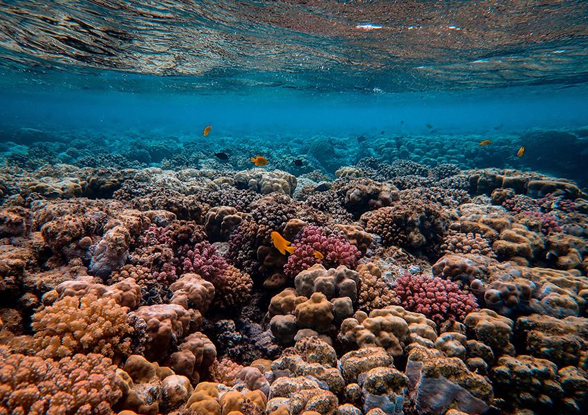 Eco Living: коралловые рифы могут исчезнуть через 30 лет, но их еще можно спасти