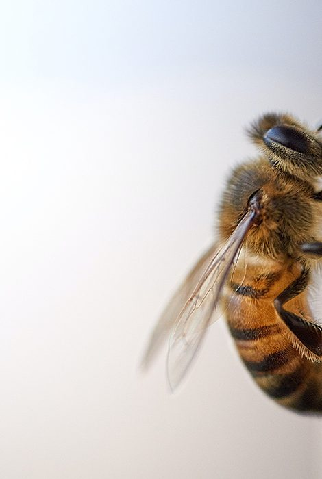 Eco Living: пчелы — почему они так важны и как их спасти