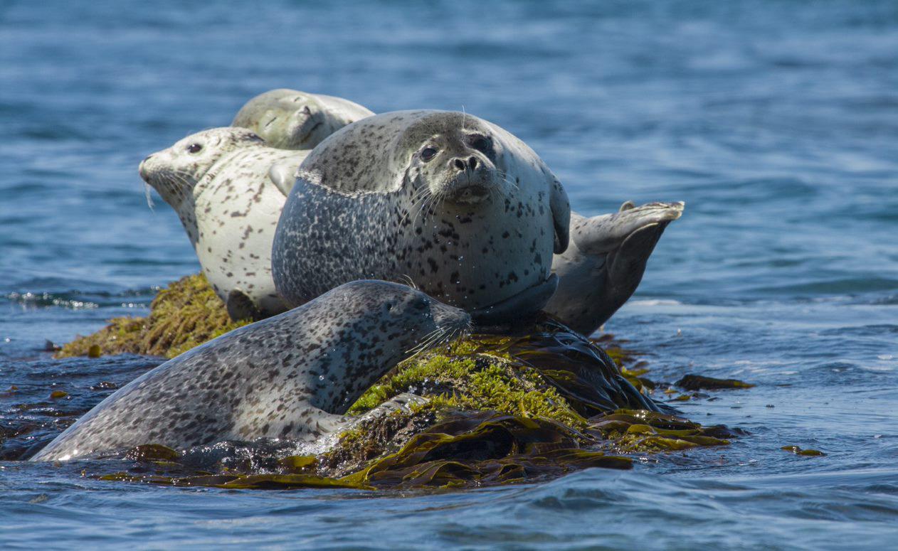 Kenzo, WWF и «Л'Этуаль»: экопроект «Защитим моря России»
