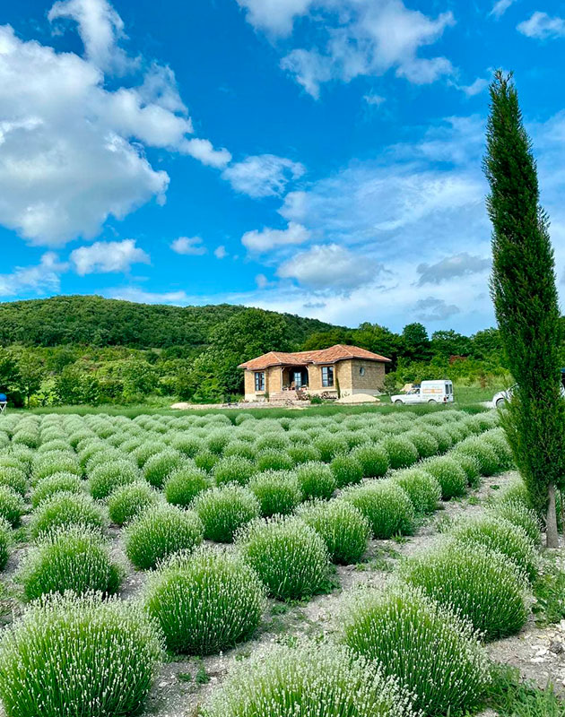Maison Des Plantes Aromatiques