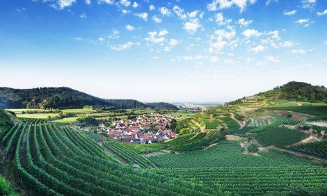 Вкус лета: захватывающее путешествие по винным регионам Германии
