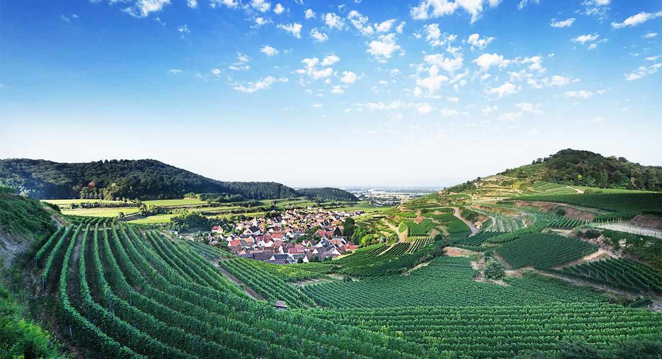 Вкус лета: захватывающее путешествие по винным регионам Германии — не только рислинг