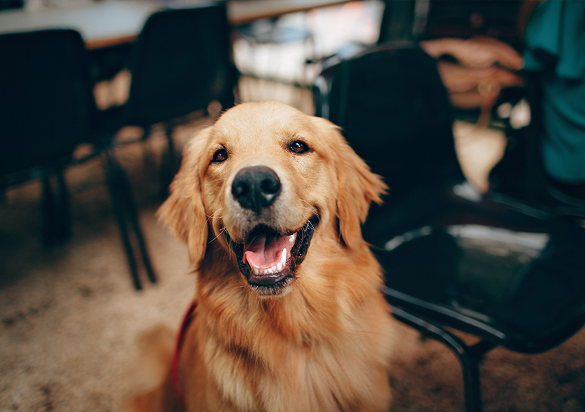 Хорошие новости: моральный вред собакам компенсируют — пока только в Бразилии