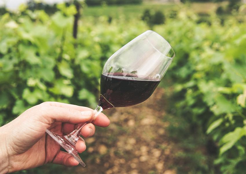 The World's Best Vineyards 2021: российские винодельни — впервые в престижном списке