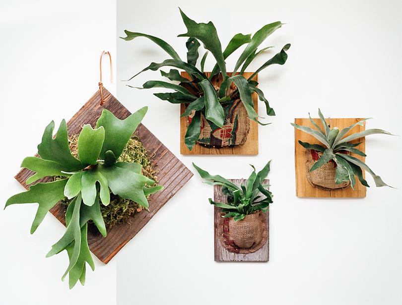 Дизайн & Декор: зимний сад — 5 необычных способов вписать растения в интерьер