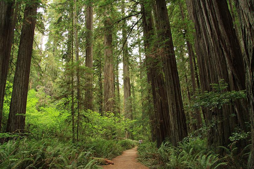 Национальный парк Редвуд, Калифорния