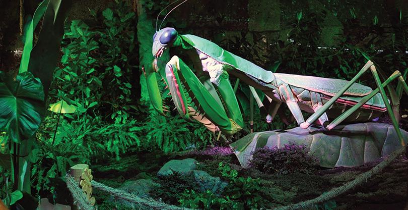 Выставка гигантских насекомых